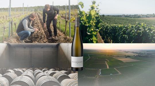 Weingut-Dreissigacker